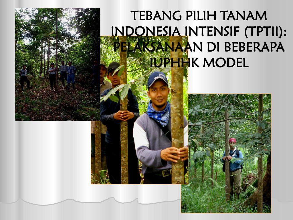 Sistem Tebang Parsial & Tebang Habis - ppt download