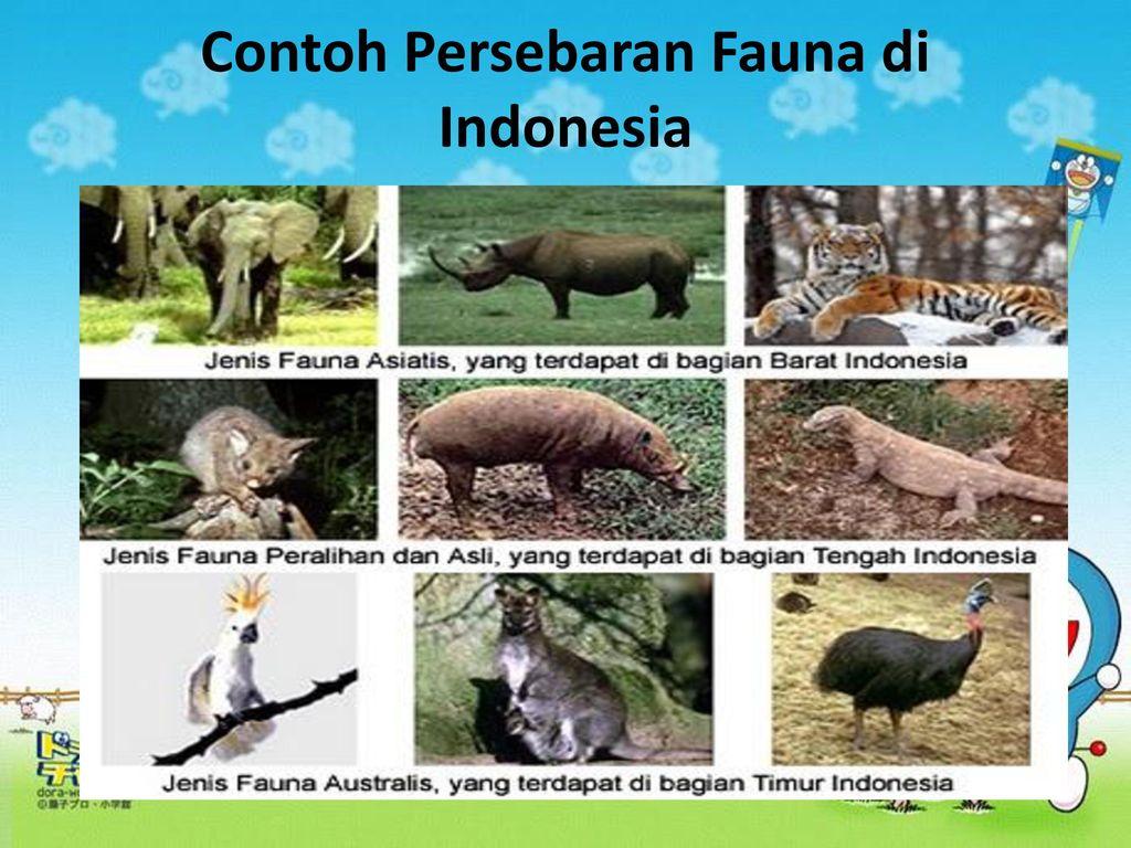 Download 8800 Gambar Flora Di Indonesia Bagian Barat Tengah Dan Timur Terbaru HD