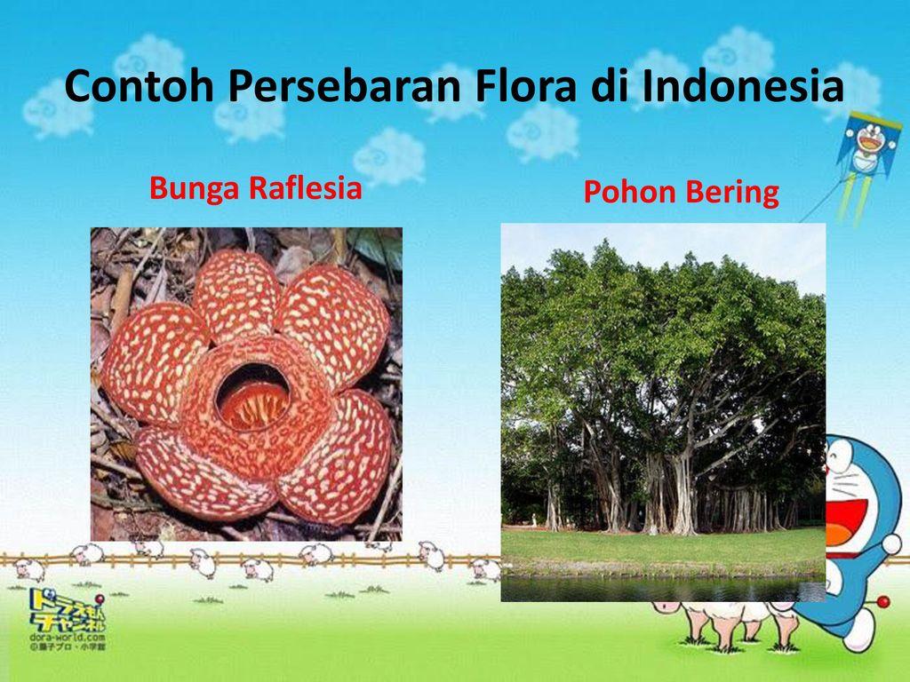 Flora Dan Fauna Persebaran Flora Dan Fauna Di Indonesia Kelas Iv Oleh Siti Halimatus Sakdiyah Ppt Download
