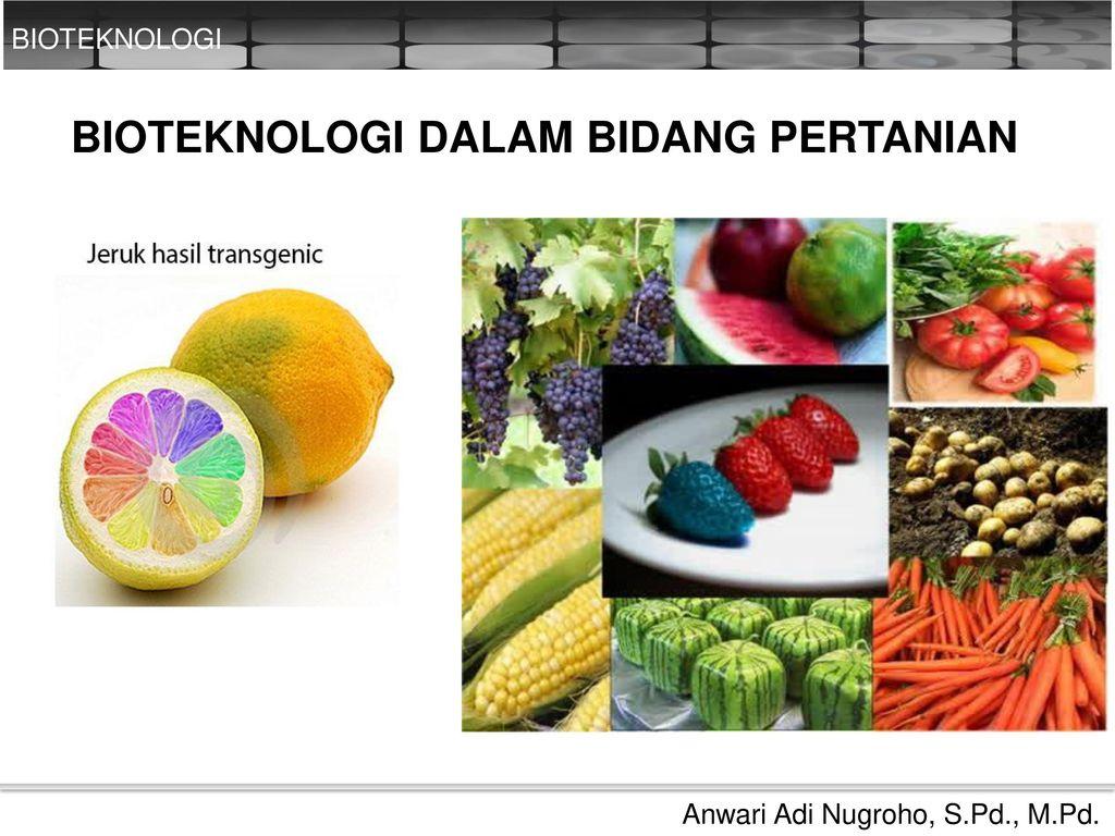 Bioteknologi Dalam Bidang Pertanian Ppt Download