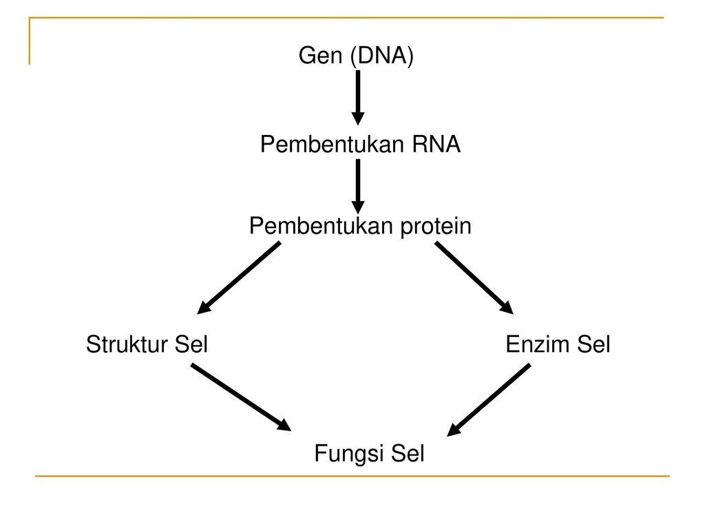 Aspek klinis kelainan kongenital dan penyakit keturunan ppt download 4 gen dna pembentukan rna pembentukan protein struktur sel enzim sel fungsi sel ccuart Choice Image