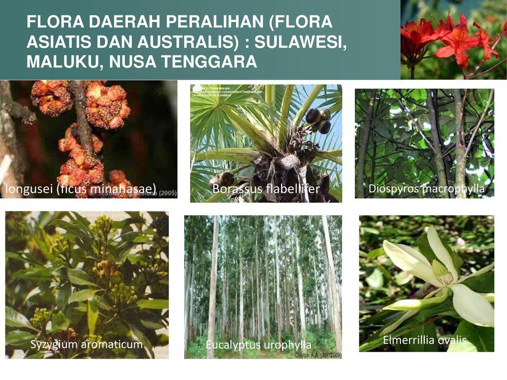 5000 Koleksi Gambar Flora Asiatis Peralihan Dan Australis Gratis Terbaru
