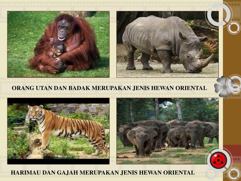 610 Koleksi Hewan Oriental Beserta Gambar Gratis Terbaik
