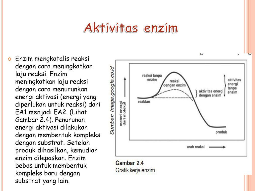 Enzim Klasifikasi Enzim Struktur Enzim Dan Mekanisme Kerja Enzim Ppt Download