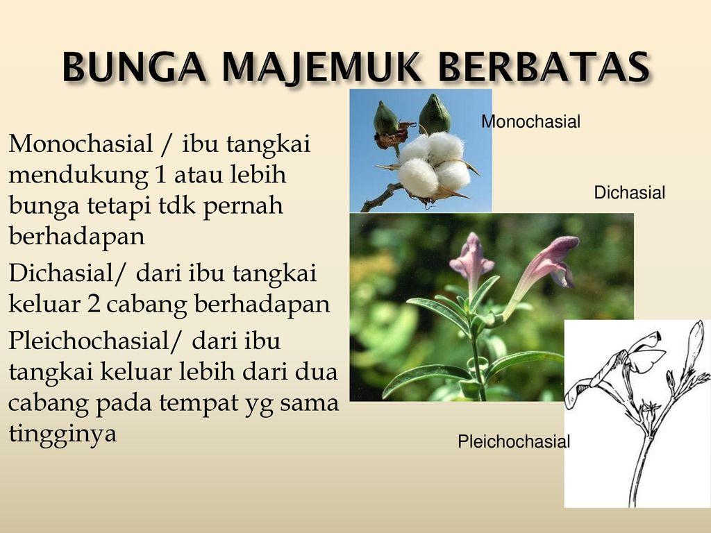 Organa Reproduktiva Bunga Flos Ppt Download