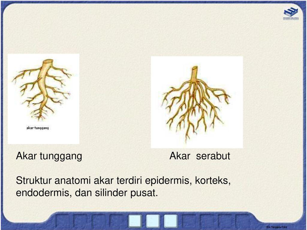 Tumbuhan Dan Fungsinya Ppt Download
