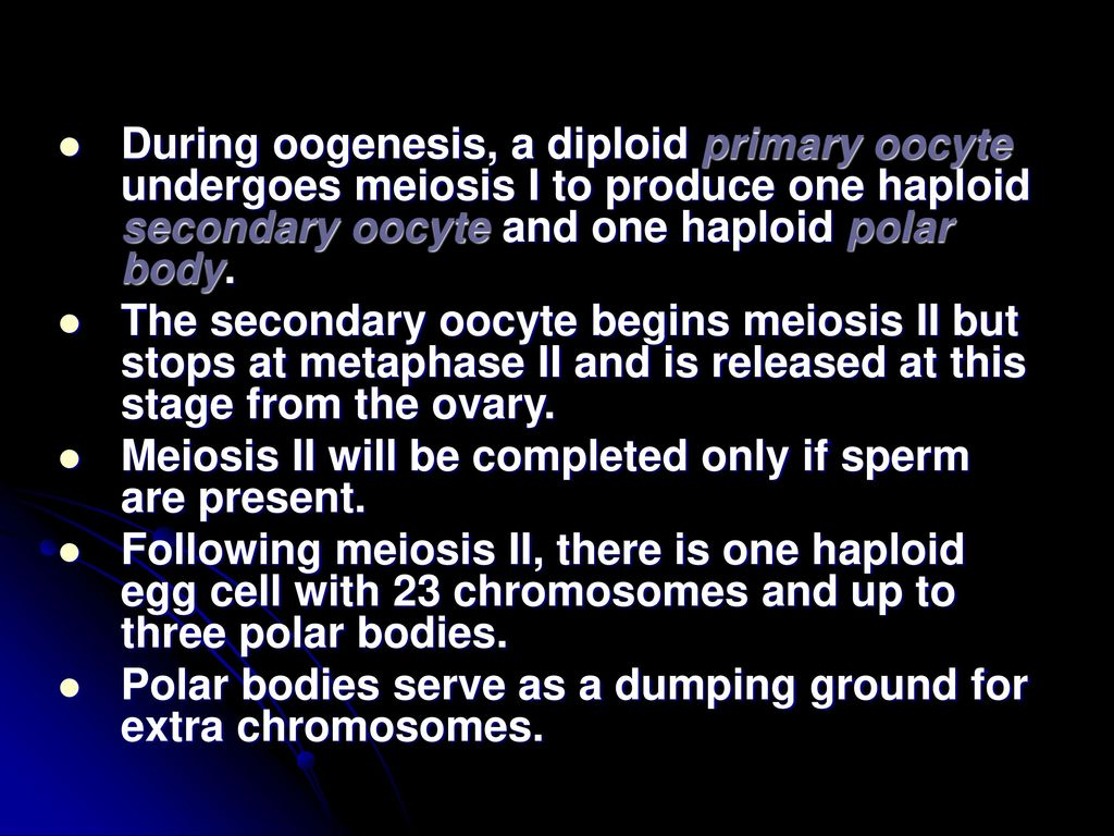 Perkembangan hewan drs jodion siburian m ppt download during oogenesis a diploid primary oocyte undergoes meiosis i to produce one haploid secondary oocyte ccuart Image collections
