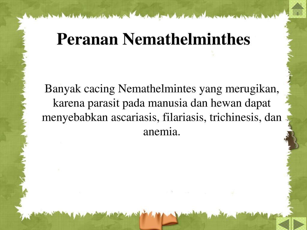 peranan nemathelminthes yang merugikan)