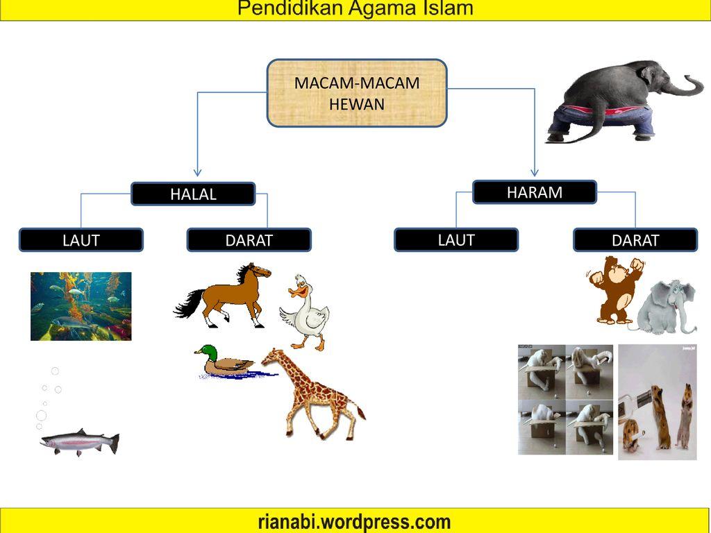 530 Gambar Hewan Yang Haram Dan Halal Terbaru