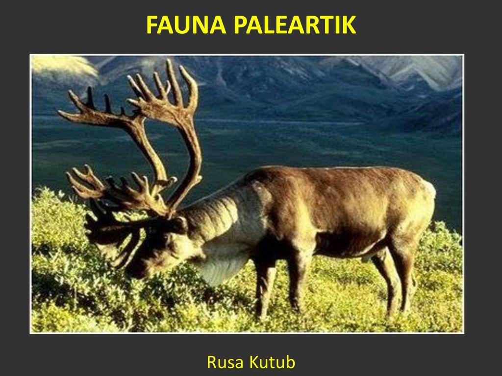 48 Gambar Fauna Di Neotropik Gratis Terbaik