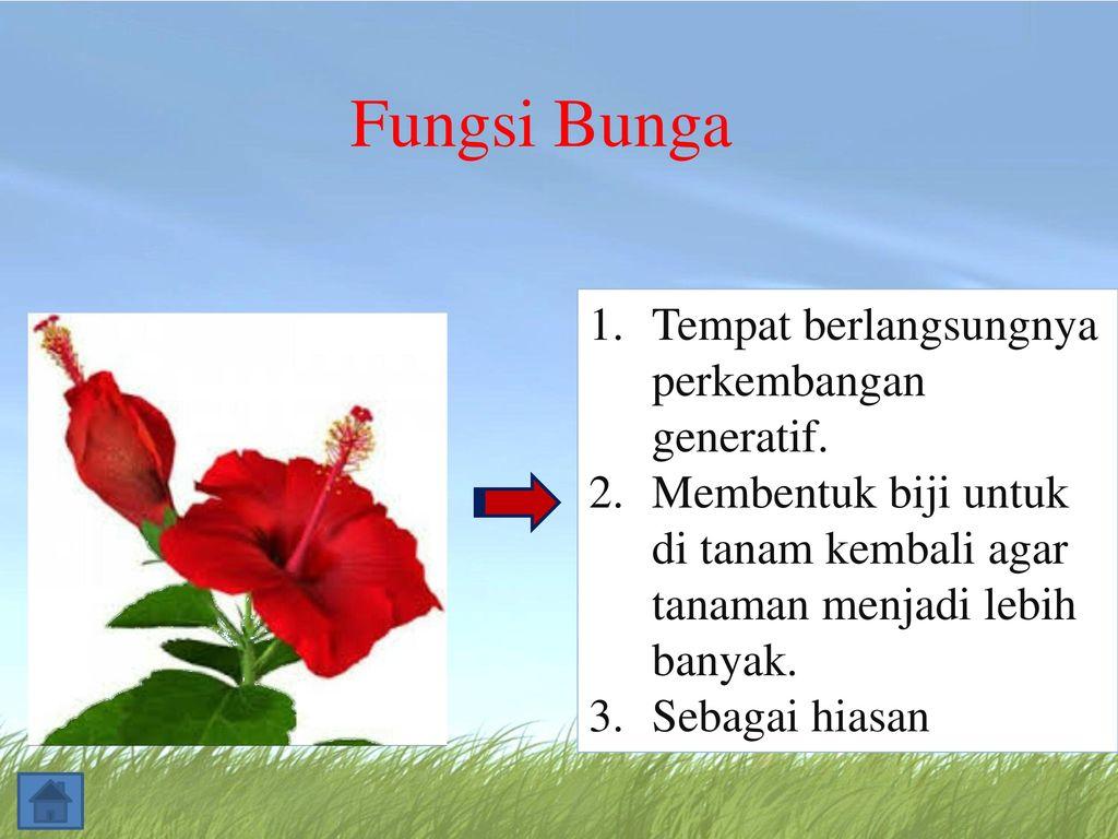 Struktur Bunga Dan Fungsinya Ppt Download