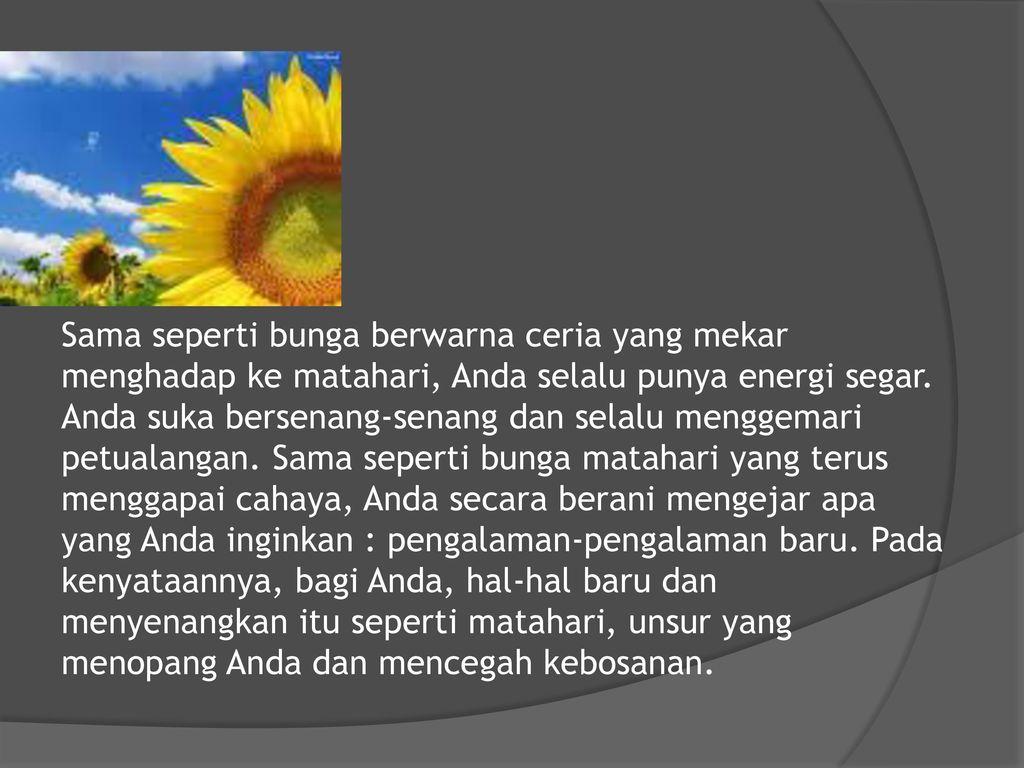 Koleksi Kata Kata Indah Tentang Bunga Matahari Cikimm Com