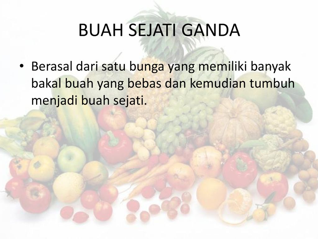 Buah Fructus Ppt Download