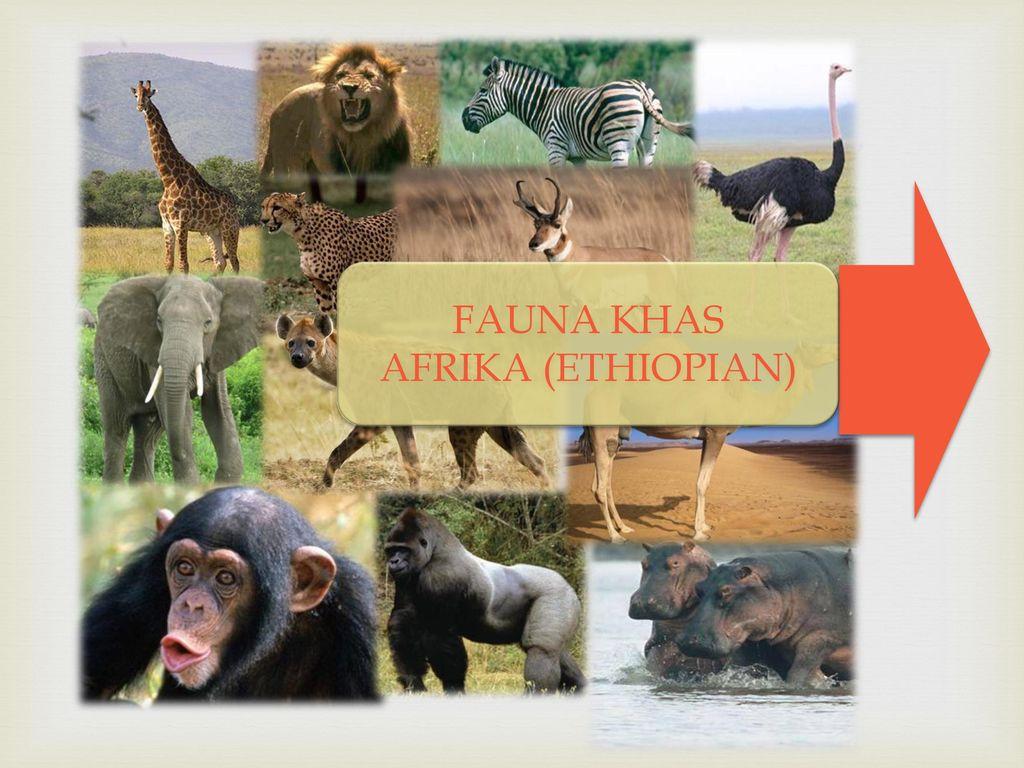 58 Gambar Hewan Fauna Ethiopian Terbaru