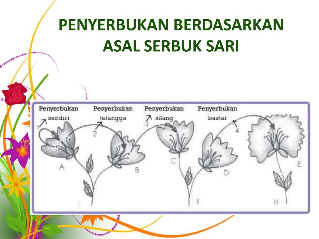 Bagian Bagian Bunga Dan Fungsinya Ppt Download