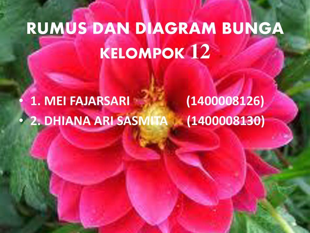 Struktur dan perkembangan tumbuhan ppt download rumus dan diagram bunga kelompok 12 ccuart Images
