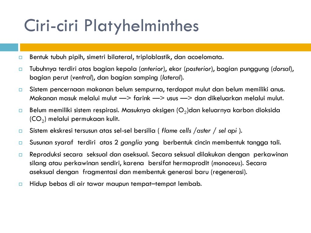 Platyhelminthes dan nemathelminthes ppt, 3 Porifera, Coelenterata, Ctenophora, Mesozoa