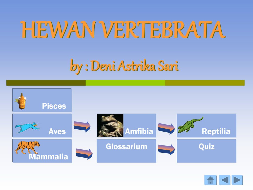 82 Download Gambar Hewan Vertebrata HD