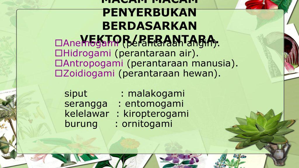 Reproduksi Tumbuhan Farida Ningrum Ppt Download