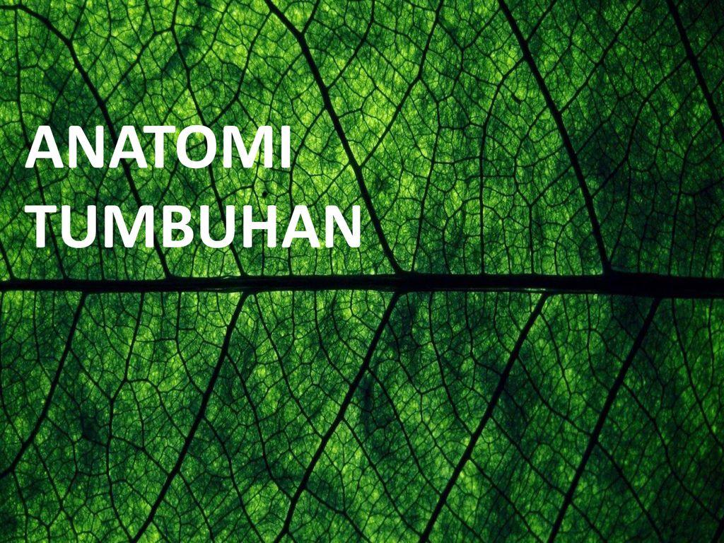 Unduh 910 Koleksi Background Ppt Tanaman Paling Keren