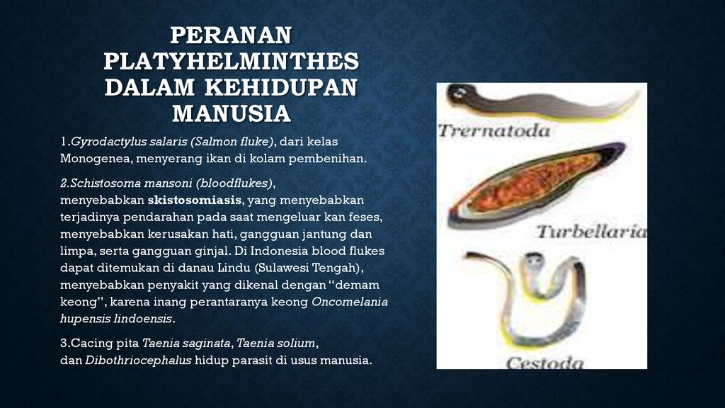platyhelminthes cacing ppt