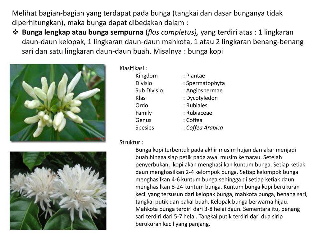 Struktur Dan Perkembangan Tumbuhan 1 Angyospermae Dicotyledonae