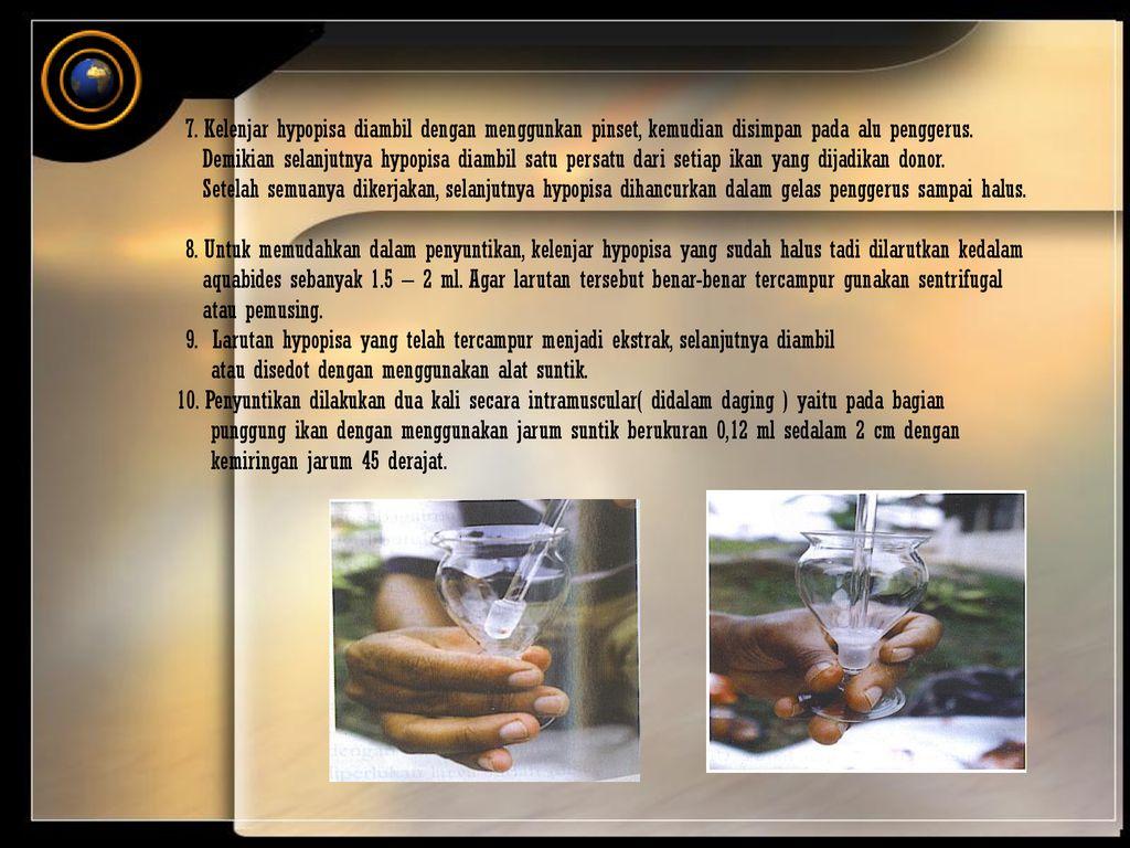 Teknik Pembenihan Ikan Patin Ppt Download Aquabides 20 7