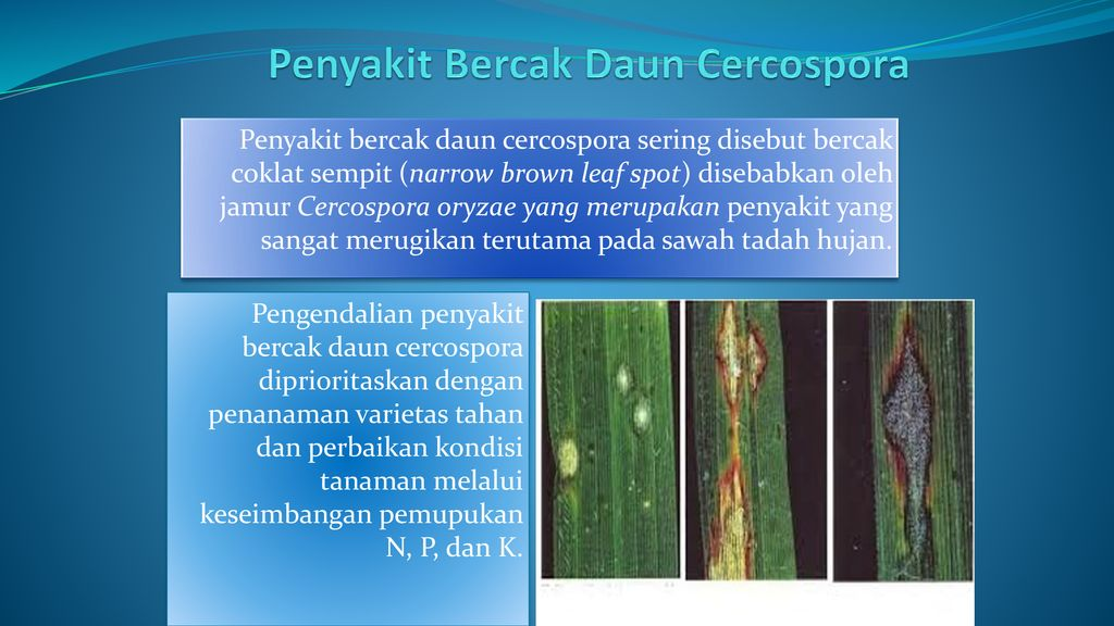 Jamur helminthosporium oryzae. Hogyan mozognak a férgek. Gyűrűsférgek
