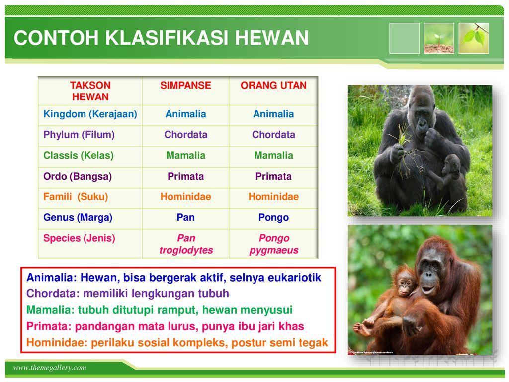 Klasifikasi Makhluk Hidup Sistem 5 Kingdom Ppt Download