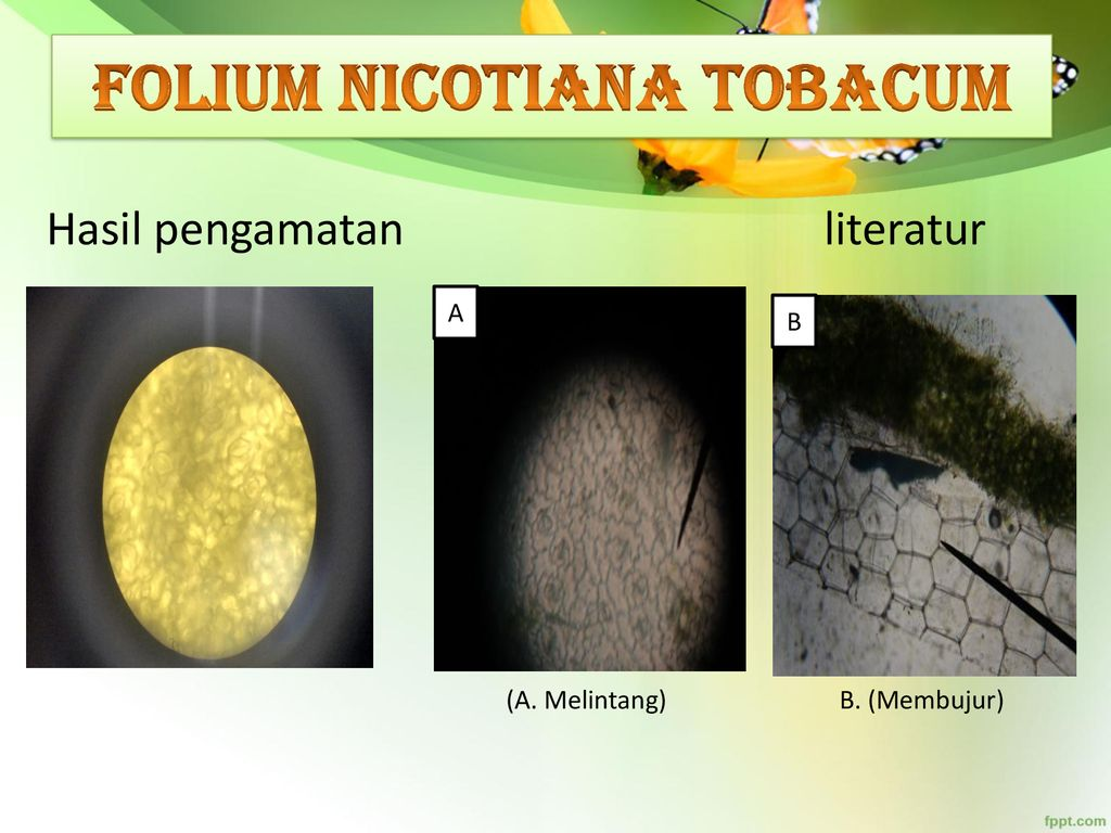 identifică helmintele purtate de sol
