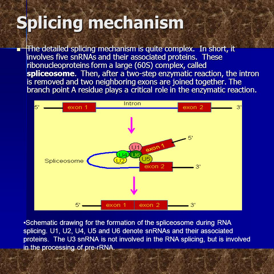 Splicing mechanism