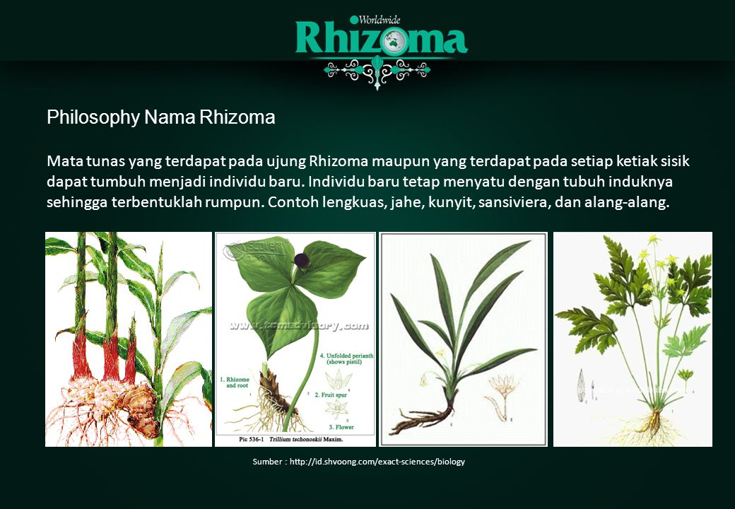 Philosophy Nama Rhizoma