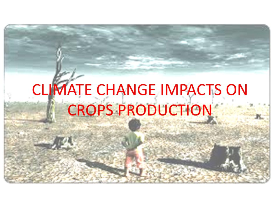 CLIMATE CHANGE IMPACTS ON CROPS PRODUCTION