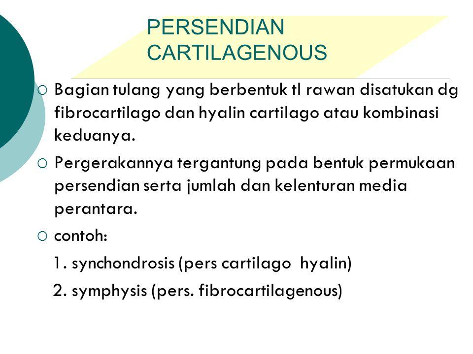 Pengantar Anatomi Veteriner Ppt Download The cartilaginous joint between manubrium and body of sternum. pengantar anatomi veteriner ppt download