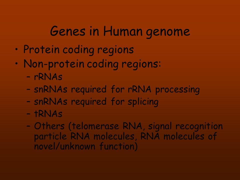 Genes in Human genome Protein coding regions