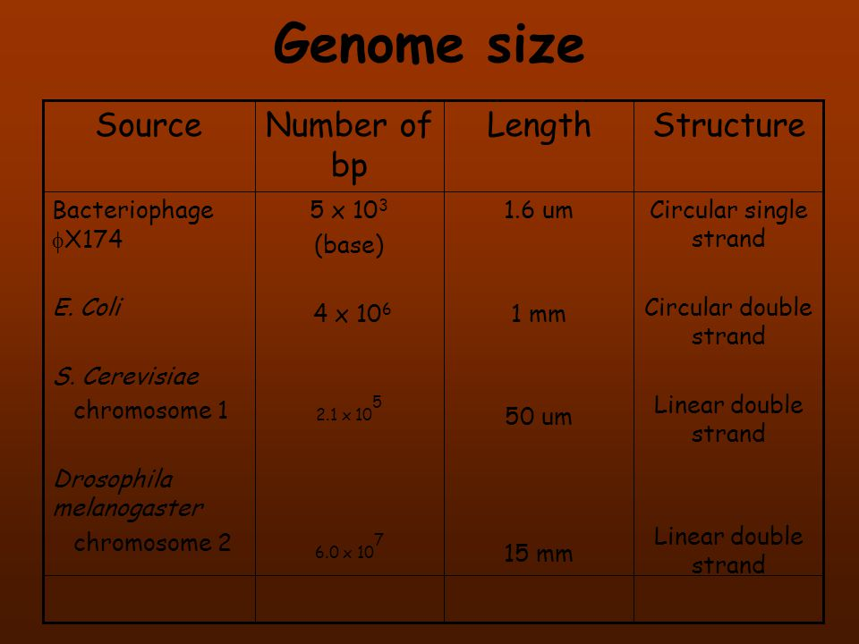 Genome size Structure Length Number of bp Source