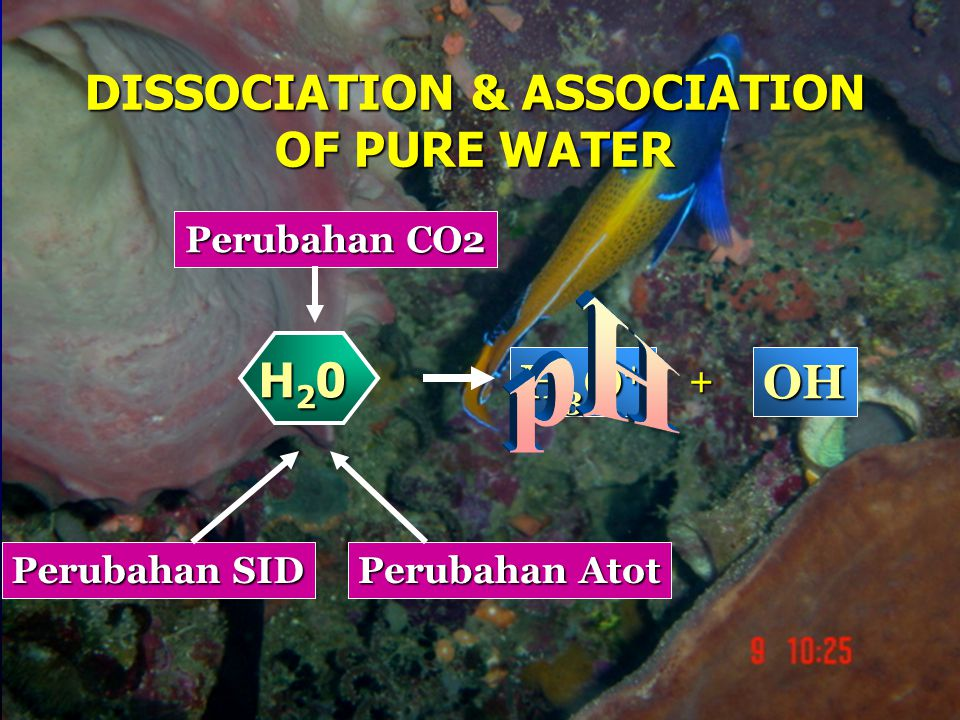 DISSOCIATION & ASSOCIATION OF PURE WATER