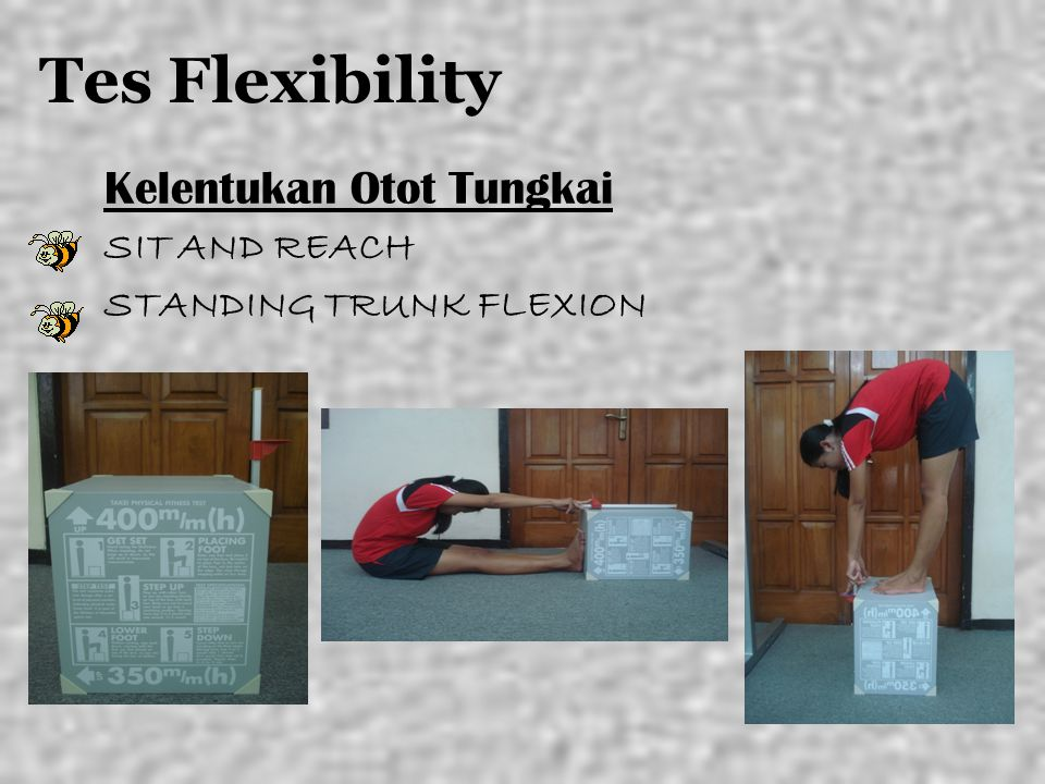 Tes Flexibility Kelentukan Otot Tungkai SIT AND REACH