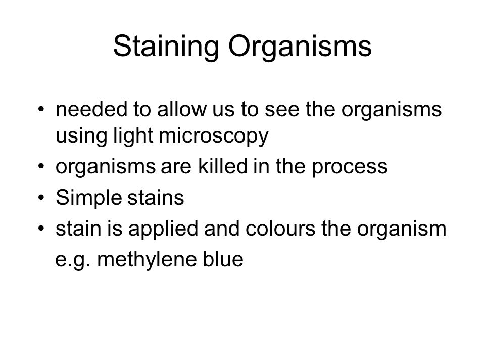 Staining Organisms needed to allow us to see the organisms using light microscopy. organisms are killed in the process.