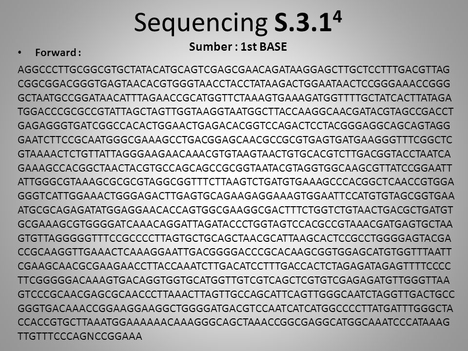 Sequencing S.3.14 Sumber : 1st BASE