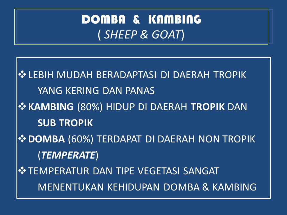 DOMBA & KAMBING ( SHEEP & GOAT)