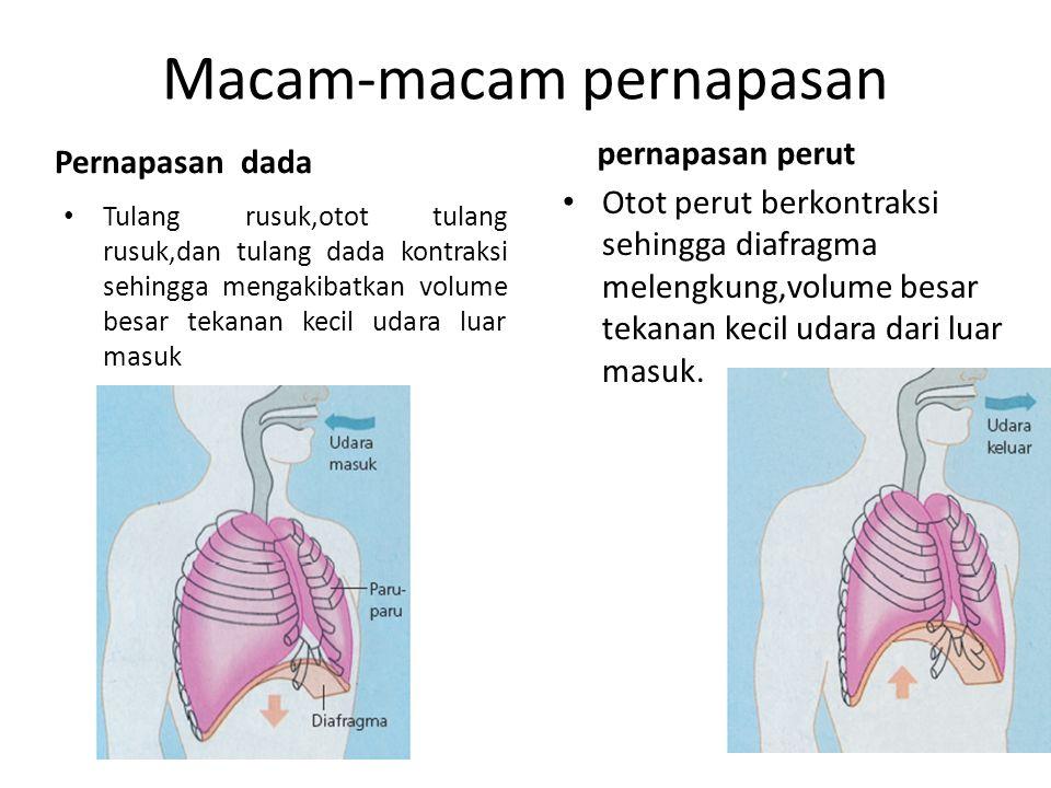Patologi Sistem Pernafasan Tractus Respiratorius Ppt Download