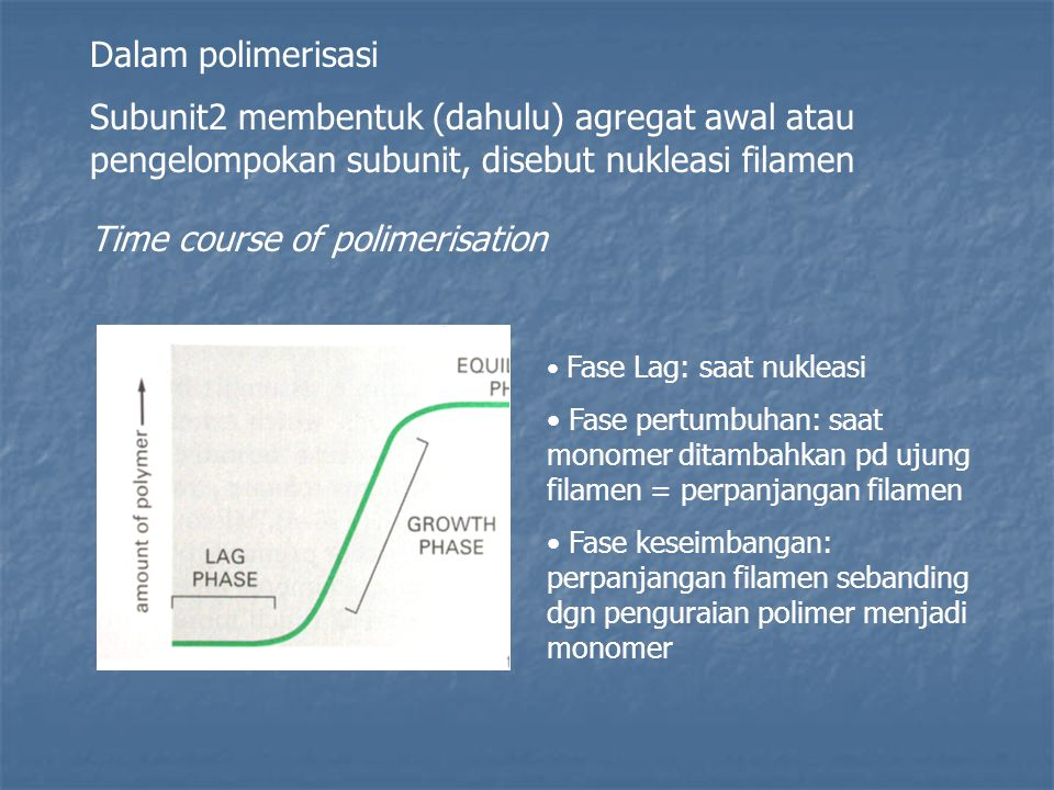 Time course of polimerisation