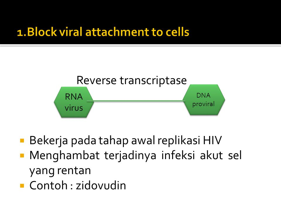 1.Block viral attachment to cells