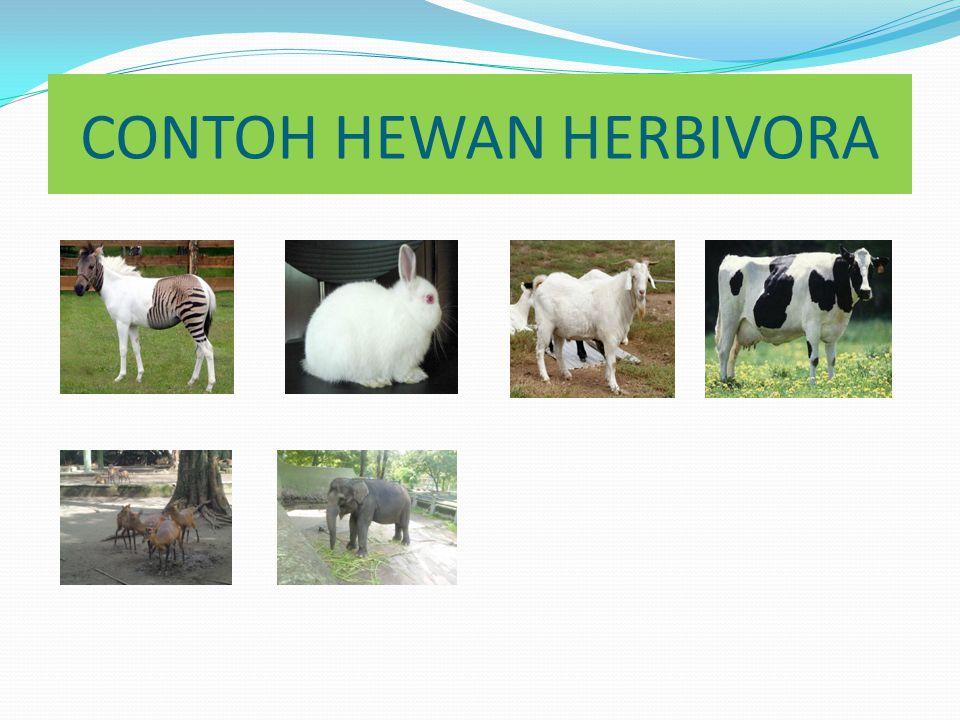 18++ Contoh gambar hewan herbivora karnivora omnivora terupdate