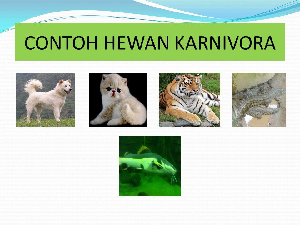 50+ Contoh hewan karnivora herbivora omnivora terbaru