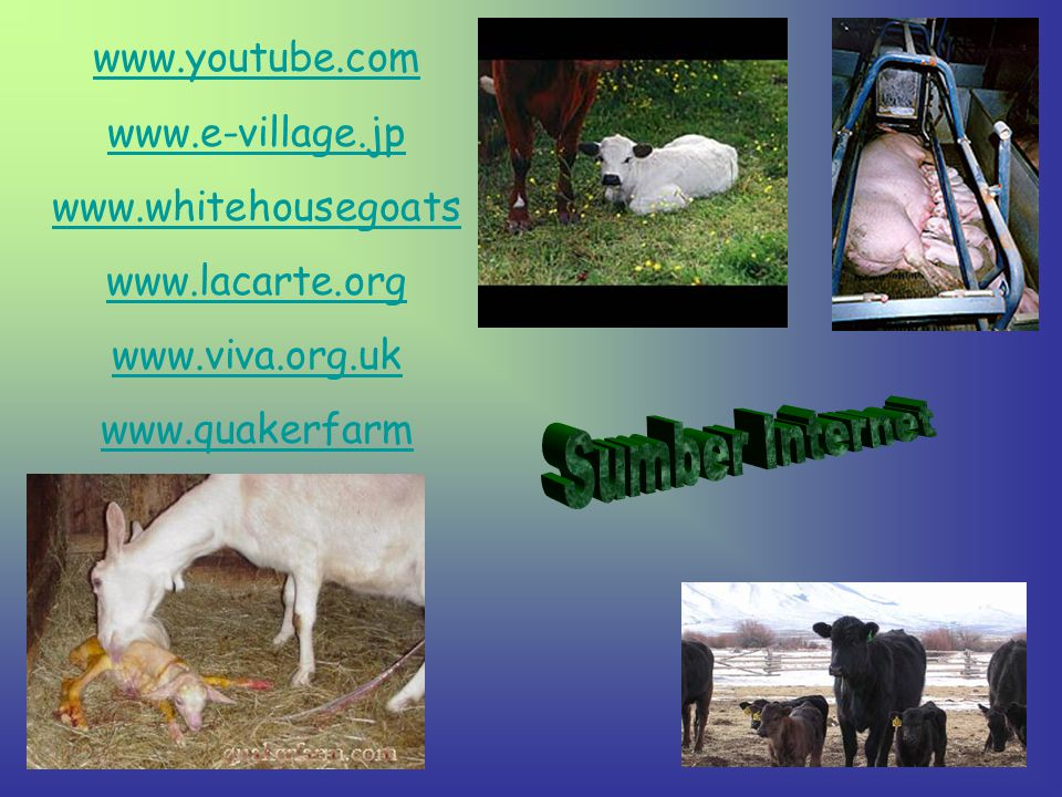 Sumber Internet www.youtube.com www.e-village.jp www.whitehousegoats