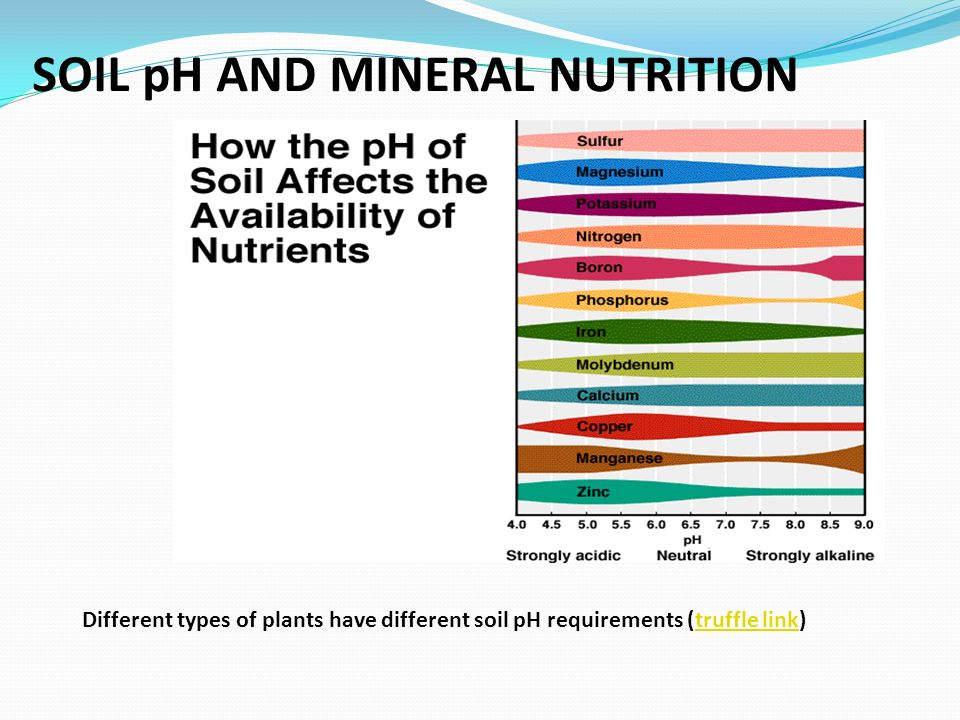 SOIL pH AND MINERAL NUTRITION
