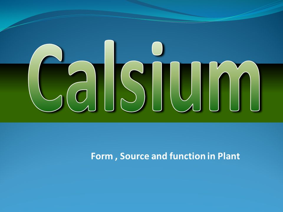 Form , Source and function in Plant
