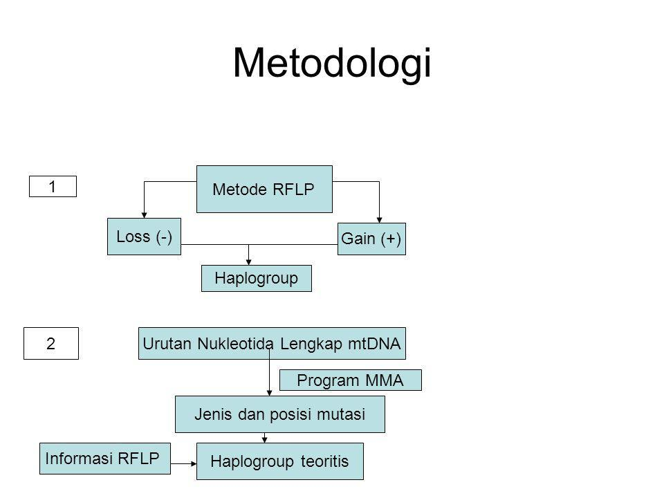 Metodologi Metode RFLP 1 Loss (-) Gain (+) Haplogroup 2